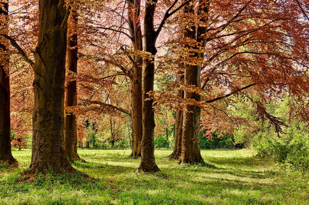 Im Frühling den Wald entdecken
